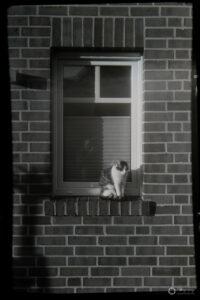Katze - Analogfotografie